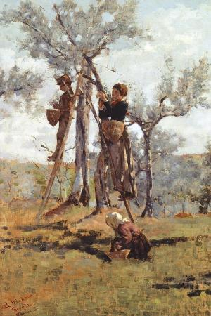 The Olive Harvest, Ca 1892