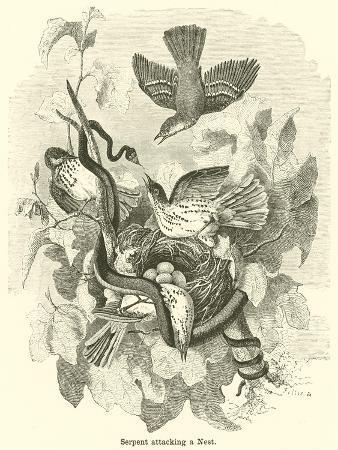 Serpent Attacking a Nest