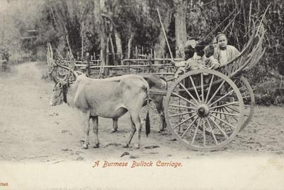 A Burmese Bullock Carriage