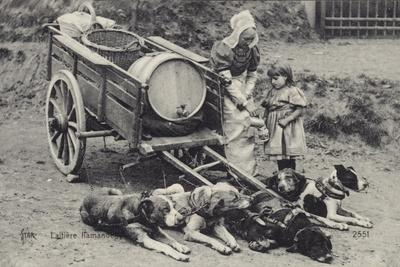 Flemish Milkmaid and Mobile Dairy