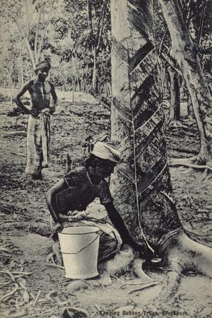 Tapping Rubber Trees, Singapore