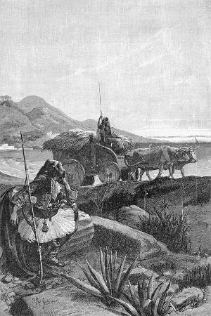 Canaris,19th Century