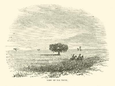 View on the Teche, April 1863