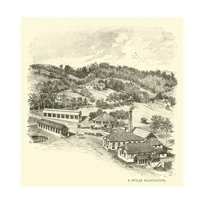 A Sugar Plantation
