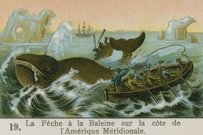 Whaling Off the Coast of South America