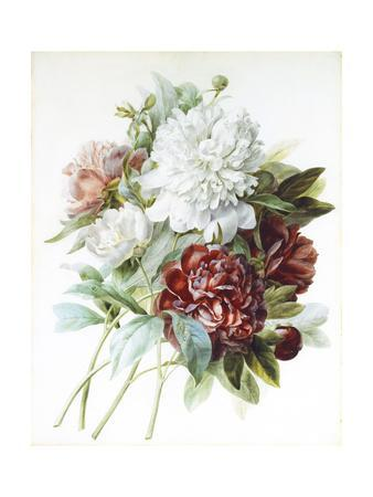 A Bouquet of Red, Pink and White Peonies