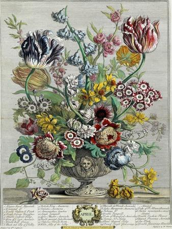 April, from 'Twelve Months of Flowers', 1730