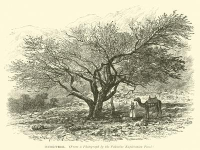 Nubk-Tree