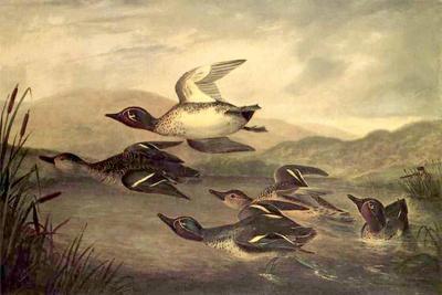 Wild Ducks Rising, 1840