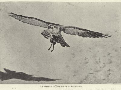 One of the Birds of M Barrachin