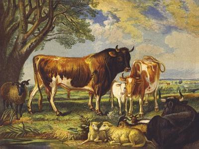 Great Cattle