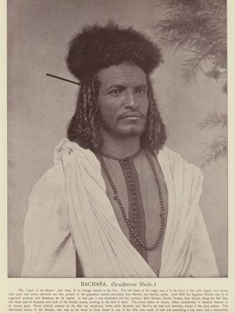 Bachara, Soudanese Sheik