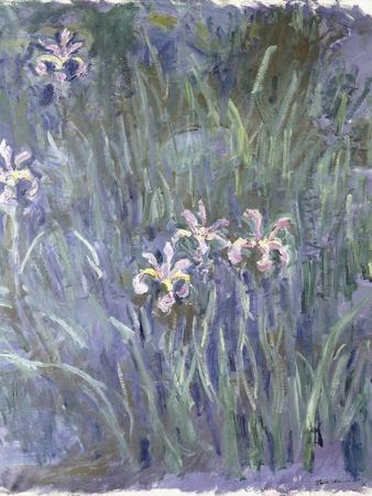Iris, C.1914-1917