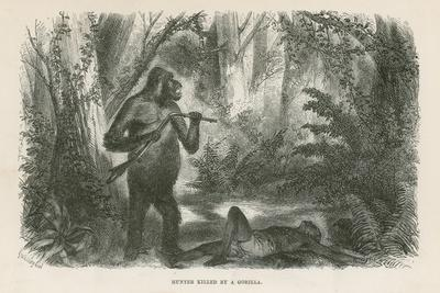 Hunter Killed by Gorilla