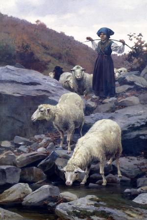 Sheep Drinking from Restano River