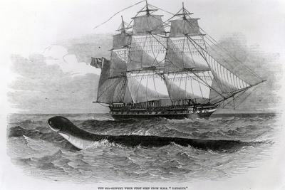 The Great Sea-Serpent When First Seen from H.M.S. Daedalus