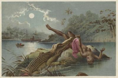 A Frightful Incident, Crocodile Attacking Native Girl