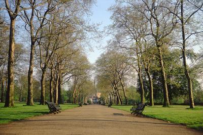 View Down 'Plane-Tree Alley' Towards the Albert Memorial