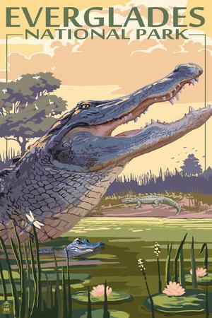 The Everglades National Park, Florida - Alligator Scene