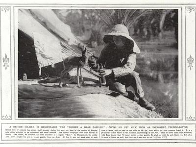 A British Soldier in Mesopotamia Who Nursed a Dear Gazelle