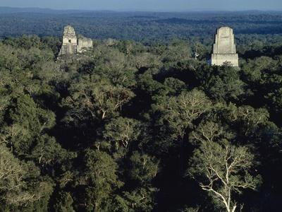 Temples from Archaeological Site of Tikal Rising Up Out of Forest, Tikal National Park