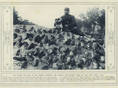 The Plague of Rats in the French Trenches, an Official Rat-Catcher, with His Dog, and their Bag