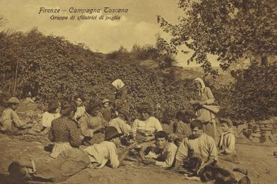 Postcard Depicting a Group of Agricultural Workers Stripping Straw in Florence