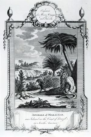 Animals of Maragnan, Illustration Taken from Moore's Voyages and Travels, 1778