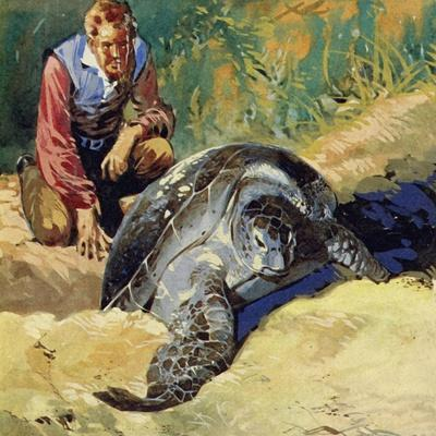 Darwin Wondered Why the Giant Tortoises of the Galapagos Islands Differed on Each Island