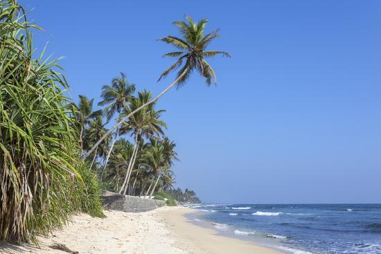 Beach And Palm Trees Talpe Sri Lanka Indian Ocean