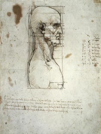 Sketch of the Head Proportions Base on Vitruvius