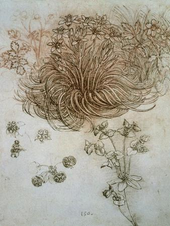 Star of Bethlehem, Wood Anemone and Sun Spurge