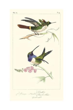 Lemaire Hummingbirds I