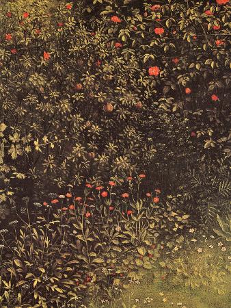 Flowering Shrubs and Plants