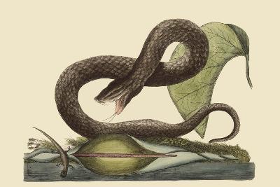 Brown Viper