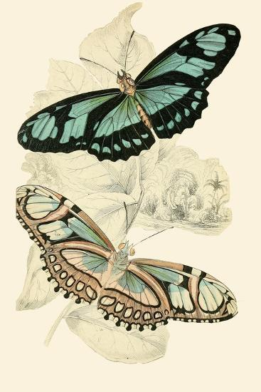 European Butterflies And Moths Prints James Duncan Allposters Com