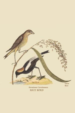 Ricebird