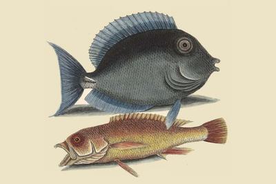 Tang and Yellow Fish