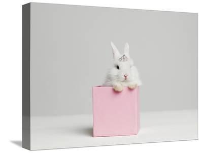White Bunny Rabbit Wearing Tiara Sitting in Pink Box, Studio Shot