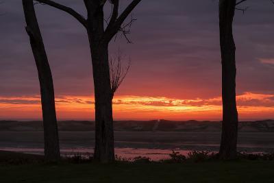 Sunrise Tree Design at Ogunquit, Maine Coast