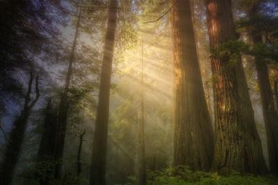 Light and the Land of the Trees, Northern California