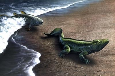 Artist's Concept Depicting the Evolution of a Lobe-Finned Fish to an Amphibian