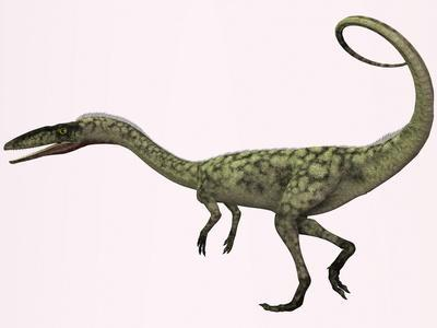 Coelophysis Bauri Dinosaur from the Triassic Period