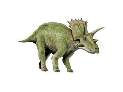 Anchiceratops Dinosaur