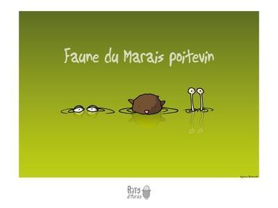 Rats d'marais - Faune poitevine