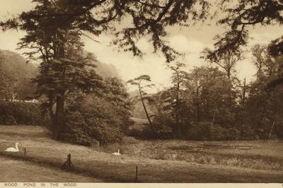 Ken Wood, Pond in the Wood