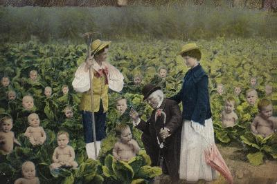 A Crop of Babies in a Cabbage Patch