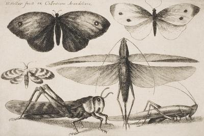 "Six Insects, Plate 2 from the Series ""Muscarum, Scarabeorum Vermiumque Varie Figure and Formae"""
