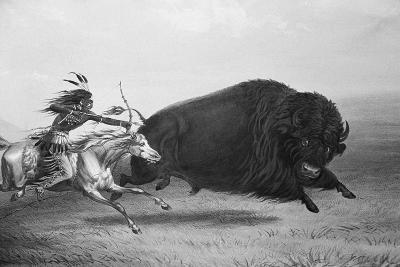 Indian Trying to Kill Buffalo