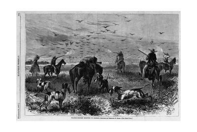 Prairie-Chichen Shooting in Kansas. Sketched by Theodore R. Davis. See First Page.